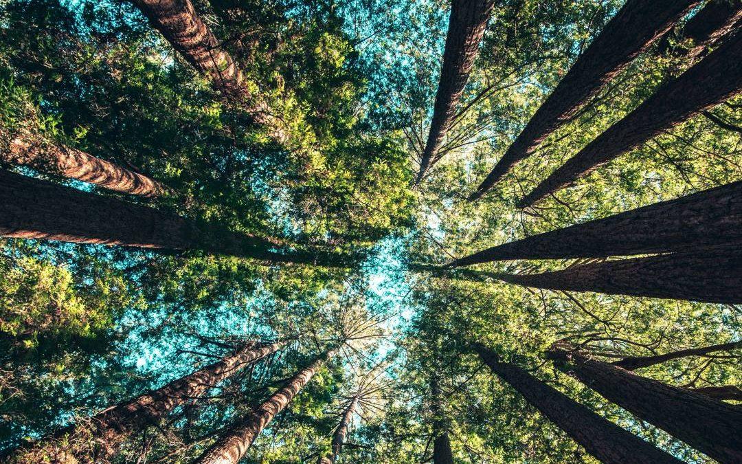 Fond za zaštitu okoliša objavio javni poziv za za sufinanciranje fotonaponskih panela u turizmu